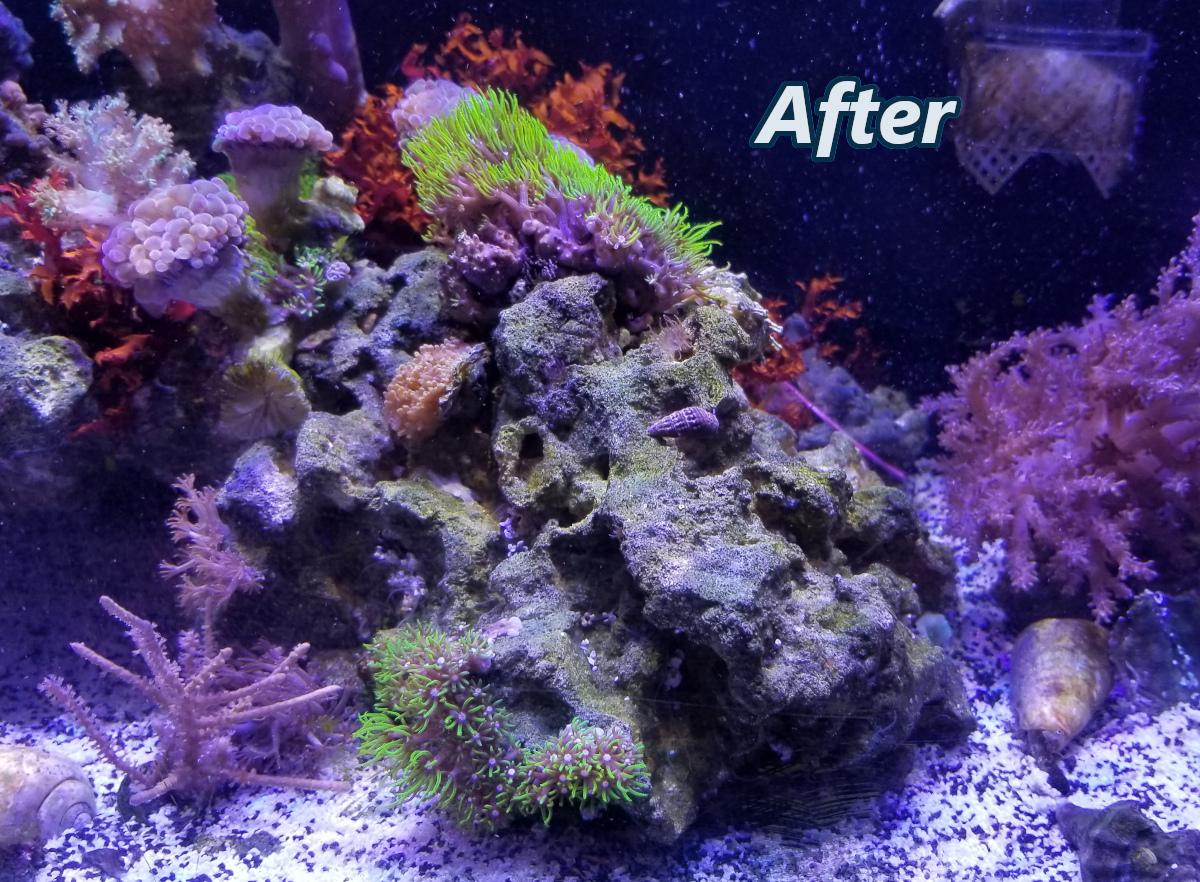 Reef Cleaners Clean Up Crews And Macroalgae