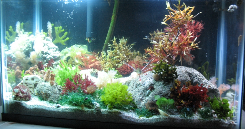 Mangrove Plants In Saltwater Aquarium 10 gallon saltwater planted